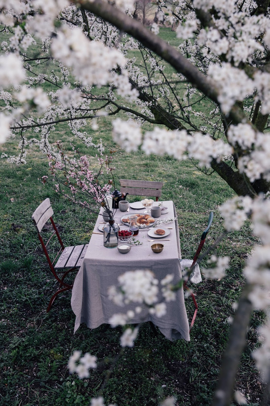 Spring-Breakfast under a Plum Tree