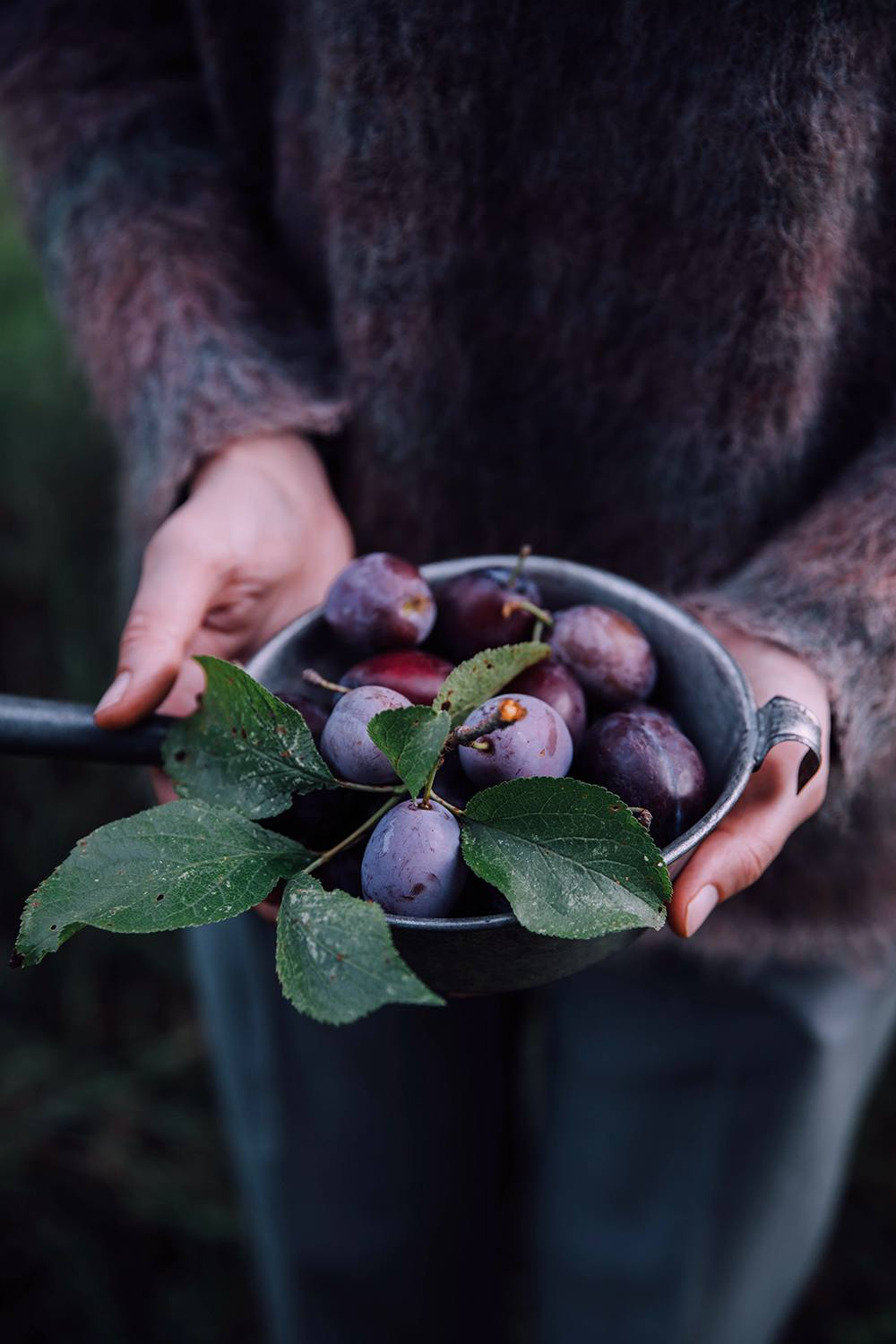plums from the garden