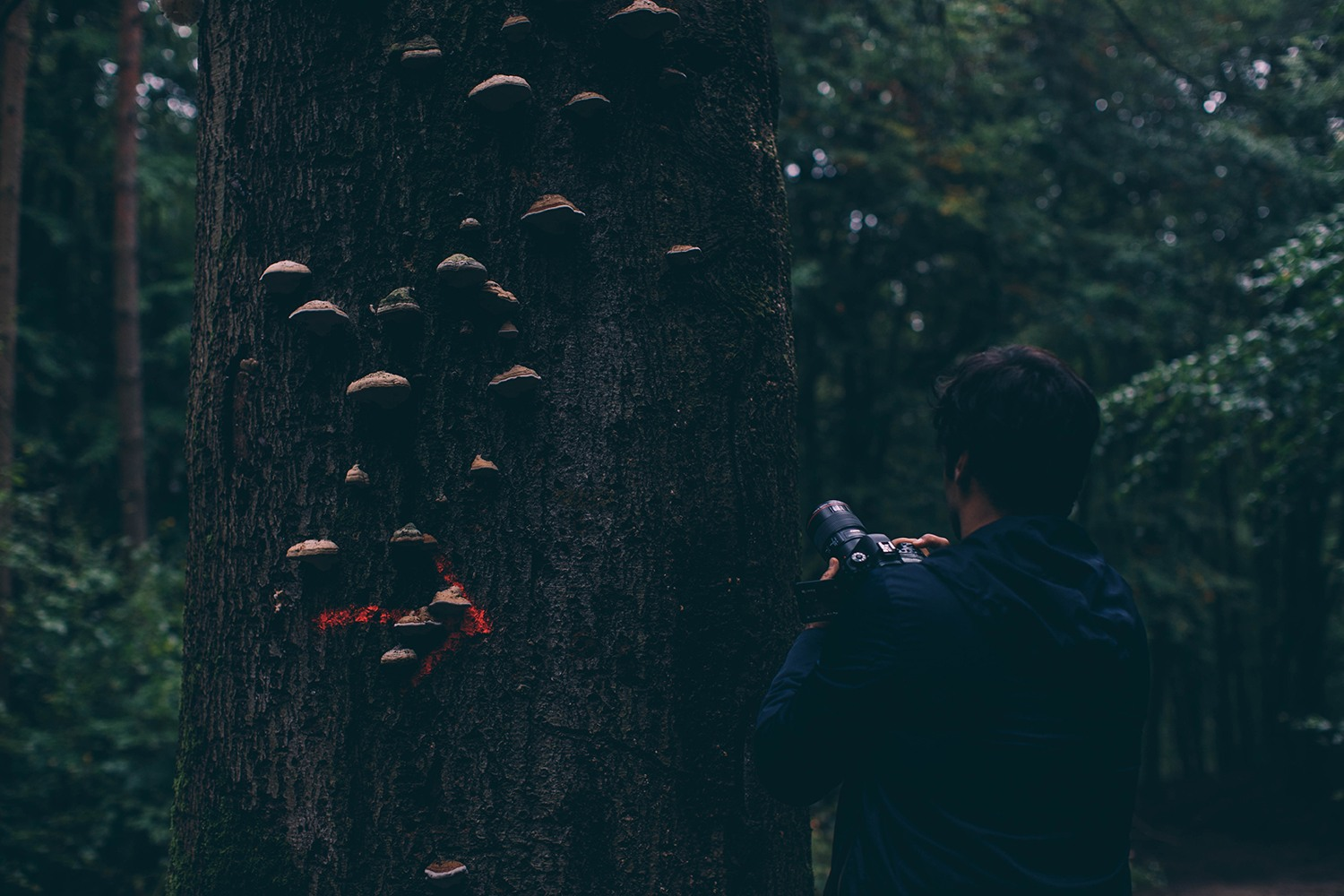 photographing in the woods