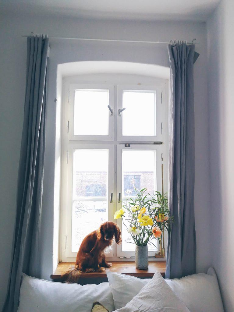dog sitting at the window