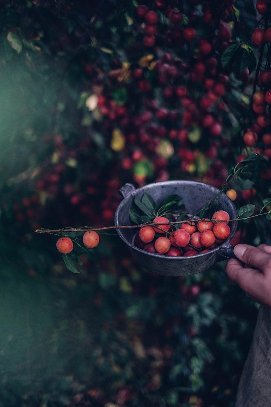 plum season